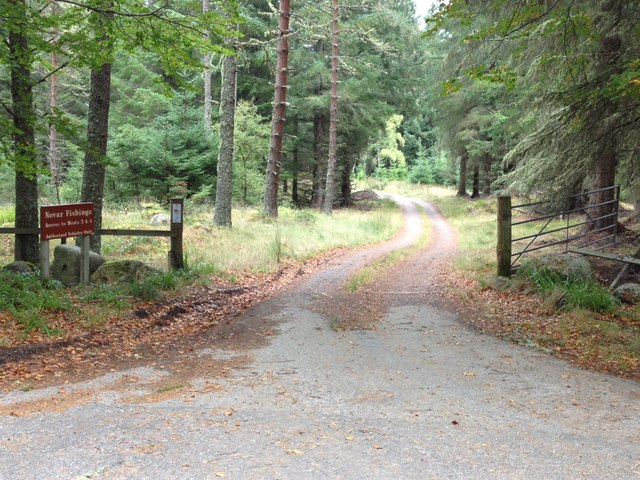 Forestry road and fishing access to the River Averon