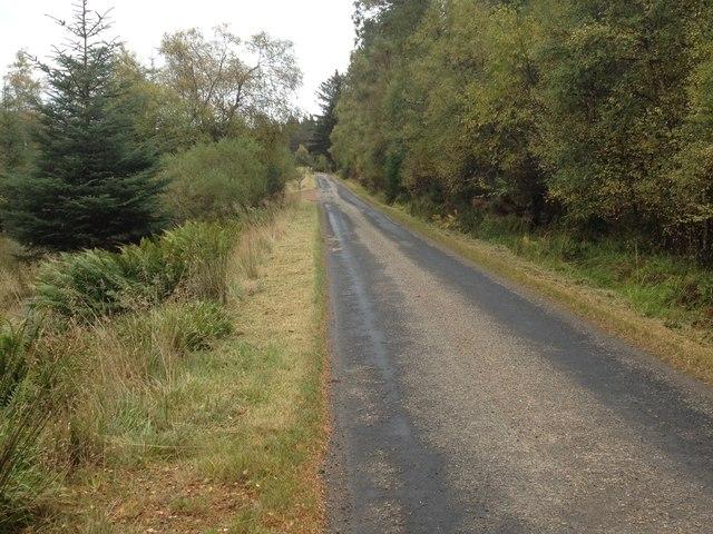 Road through Dalreoch Wood