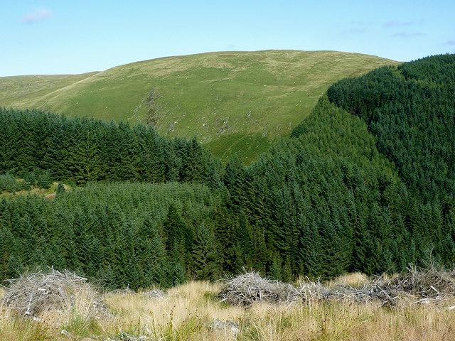 Coniferous forest across Cwm Irfon, Powys