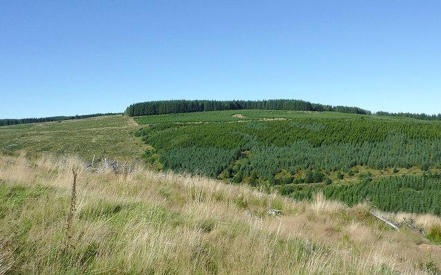 Coniferous plantation on Esgair Cloddiad, Powys