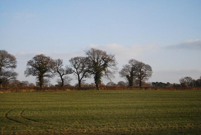 Trees, Goostrey Lane