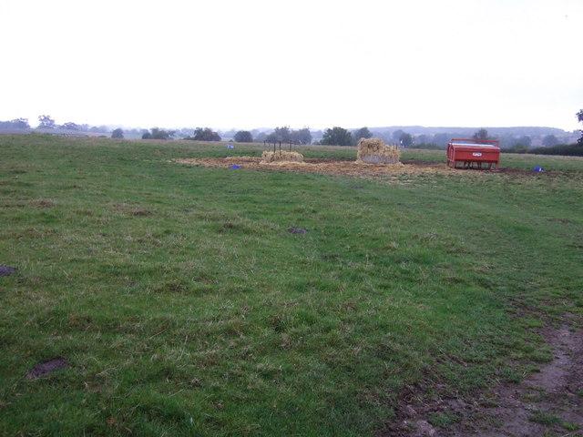 Grazing, Copy Lawn Farm