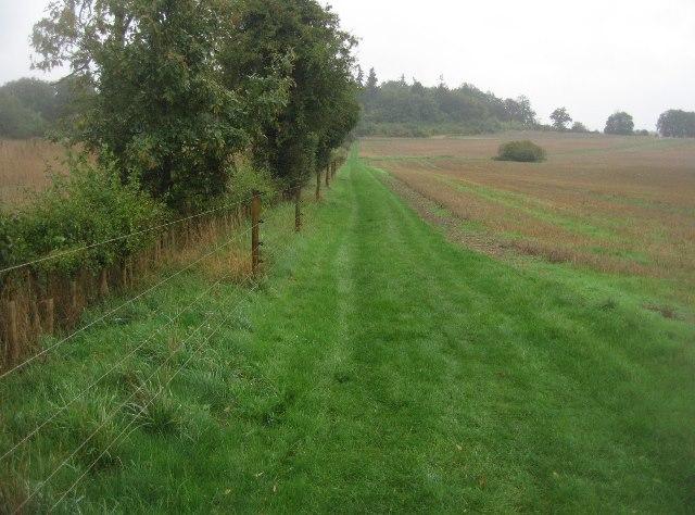 New hedge row