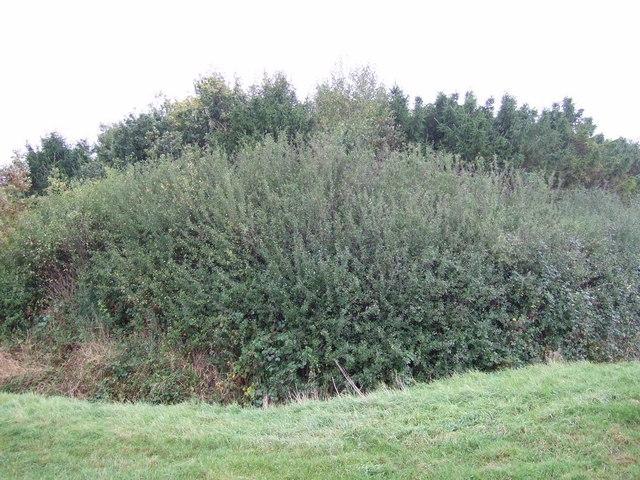 Catbury Wood