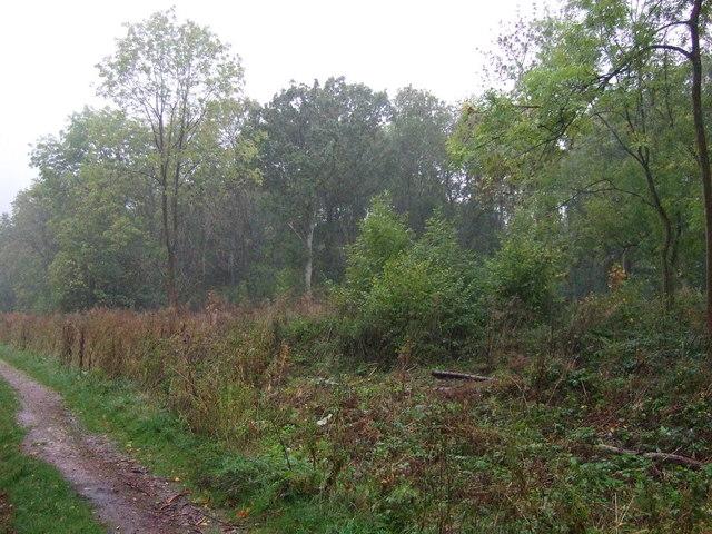 Callan's Lane Wood