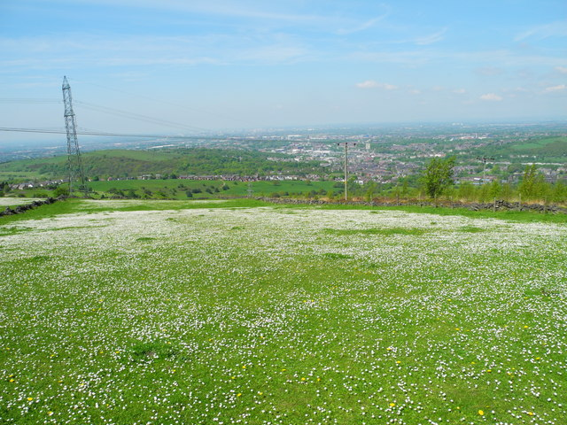 Shaw Moor in Bloom