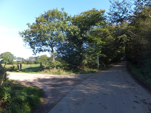 Upcott Wood and the road to Upcott (house)