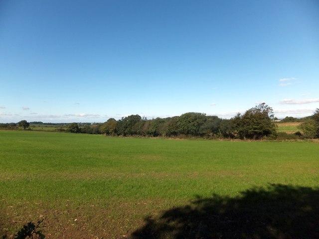 Henceford Moor