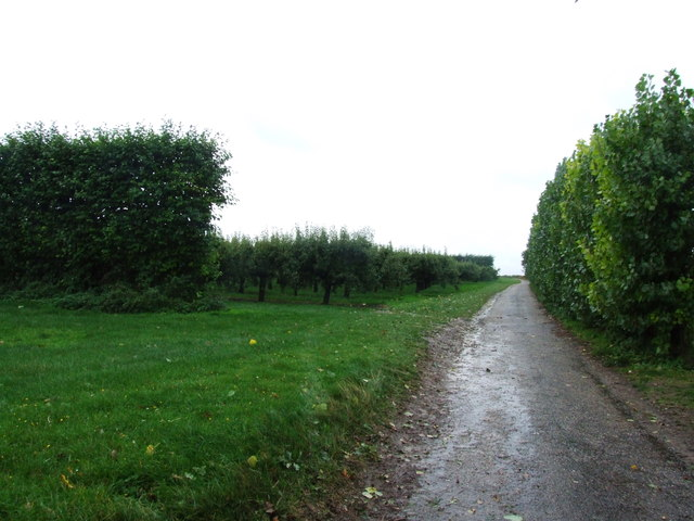 Orchards near Lynsted
