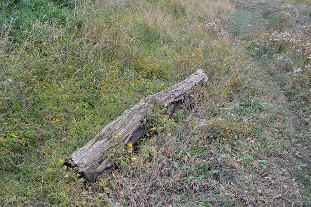 River Ribble Estuary Driftwood, Lytham - 1