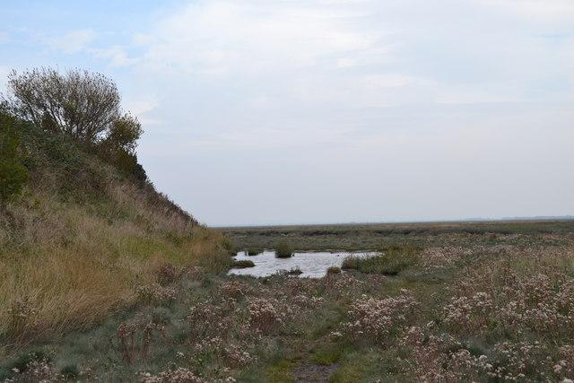 River Ribble Estuary Bog, Lytham