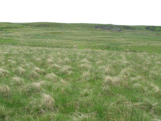 Moorland below Great Dour