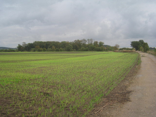 Looking towards Black Walk Plantation