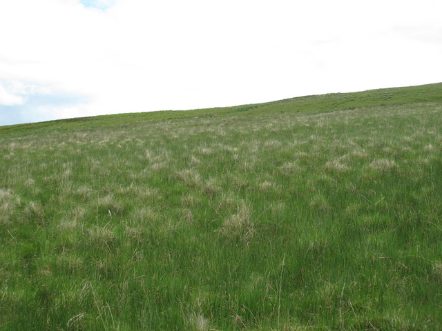 Moorland south of Cottonshope