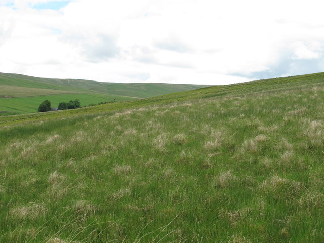 Moorland south of Cottonshope (2)
