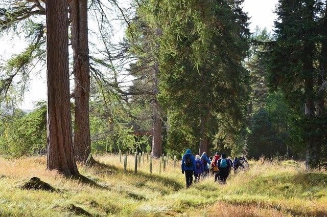 Woodland east of Mar Lodge