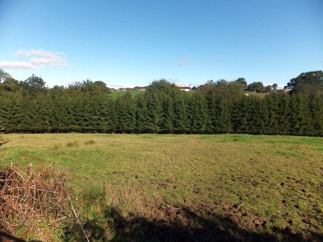 Trees beside the Henceford Brook