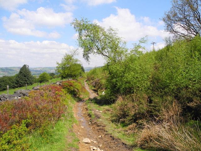 Damp Path