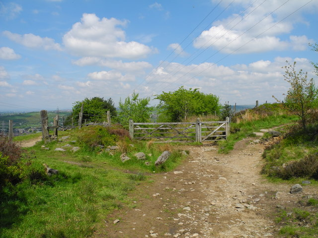 Junction of Paths, Wild Bank