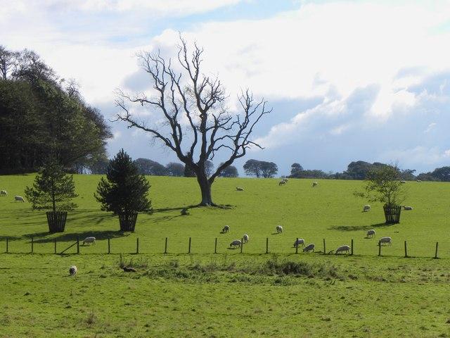 Fields near Arlington Court