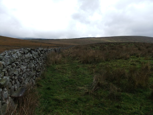 Wall on Stopes Moss