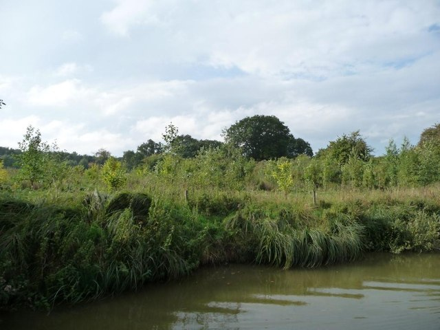New plantation, south bank, Kennet & Avon canal