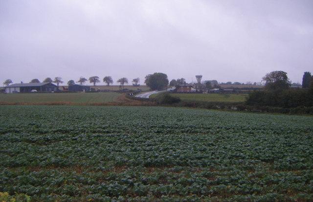 Crop field, Laughton