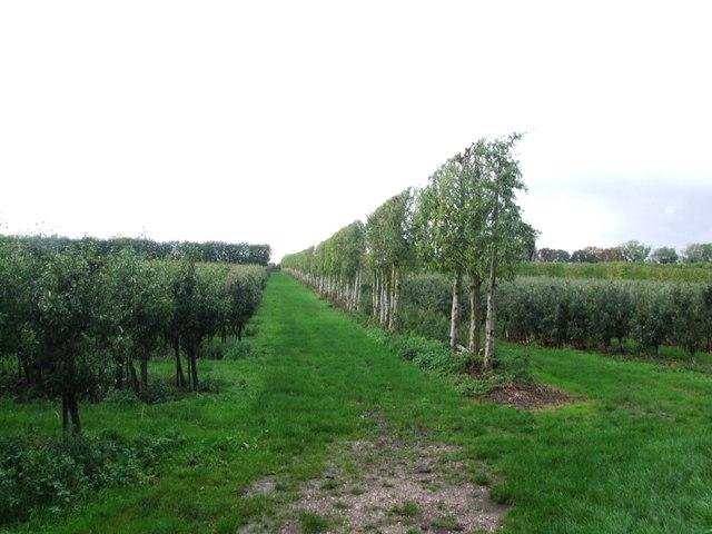Orchards near Norton