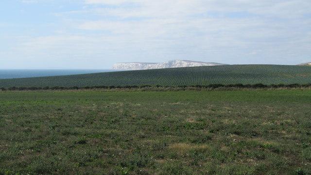 Field boundary of The Hamstead Trail near Dunsbury Hill Farm