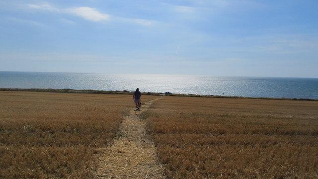 The Hamstead trail goes  through a corn field