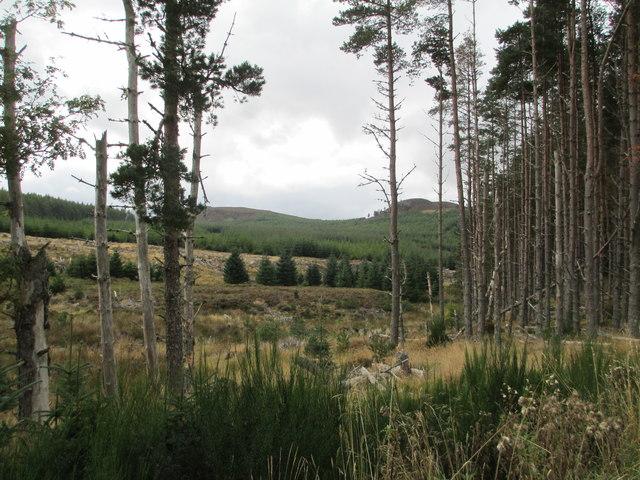 Meallmore Forest