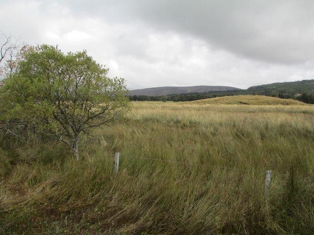 Grassland near Moy Mains
