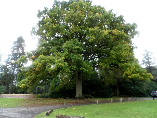 The Queen's oak tree, Finchampstead