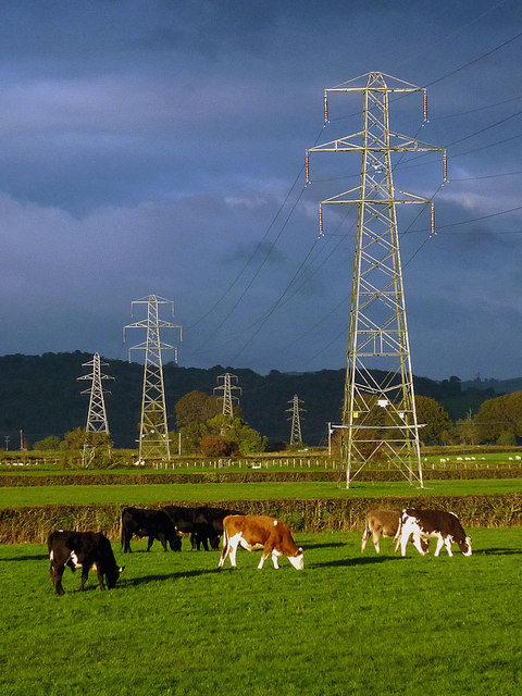 Cattle and pylons near Raven's Lodge