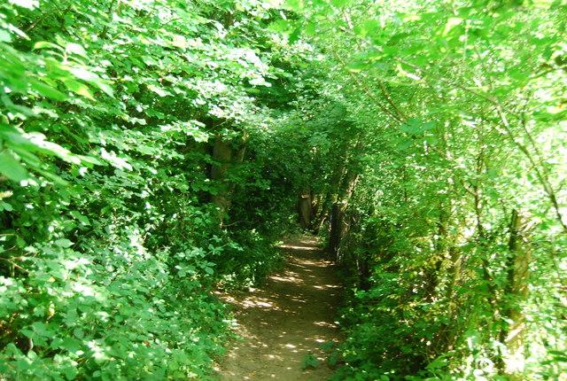 Sussex Border Path, Weir Wood Reservoir