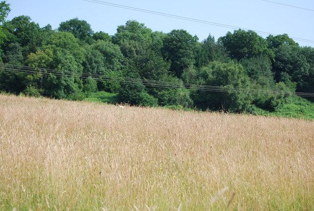 Grassland by Weir Wood Reservoir