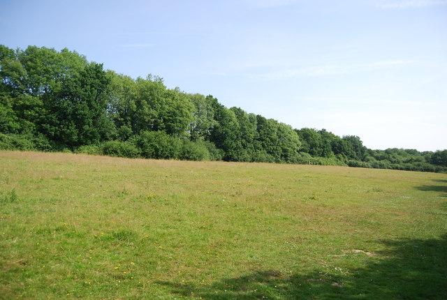Grassland, Weir Wood Reservoir