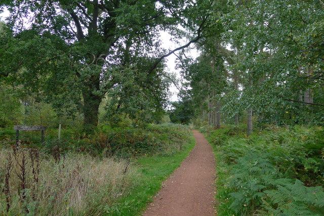 Cycle Route 6 through Duncan Wood