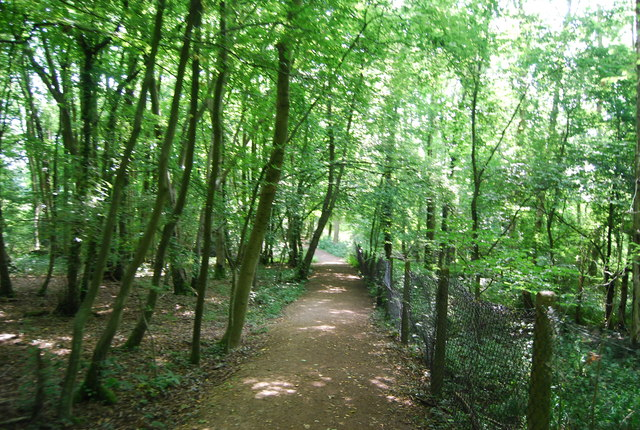 Sussex Border Path, Busses Wood
