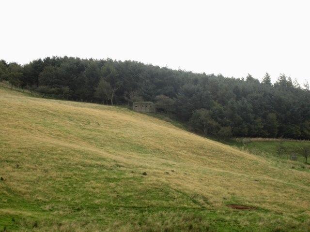 Hillside and pillbox near South Hazelrigg