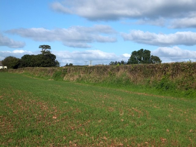 Field and hedgebank at Millbarn Cross