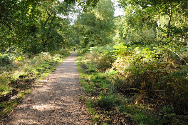 Forest path at Lower Whitelea Green