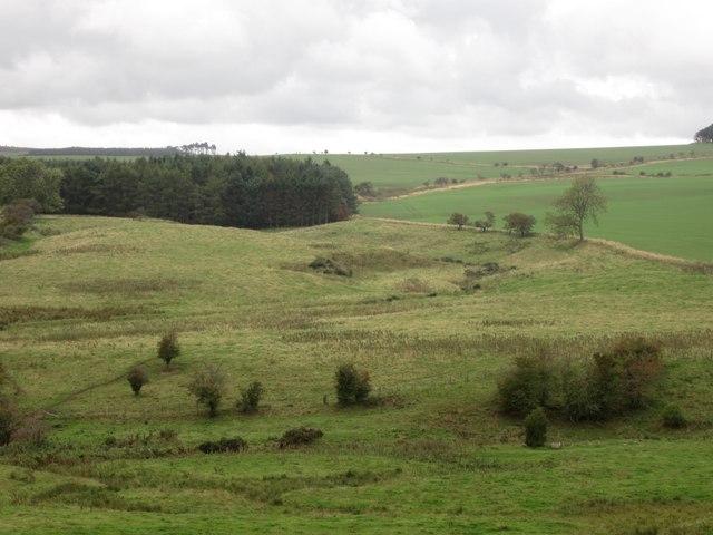 Rough grassland beside the Hetton Burn