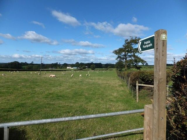 Two Moors Way crossing a field to Millmoor Farm