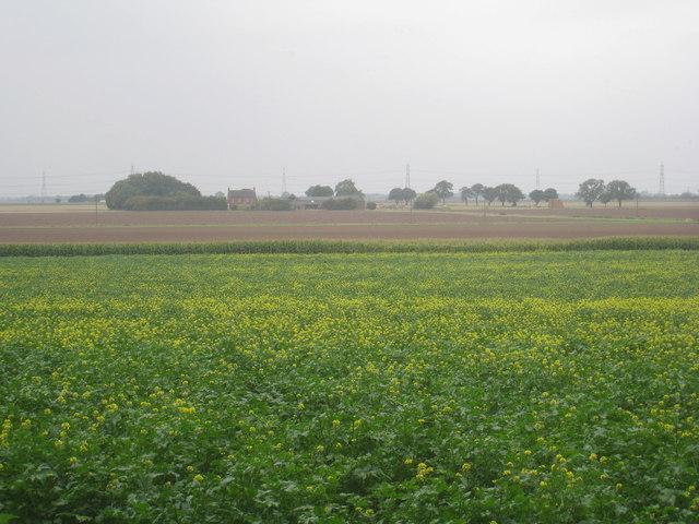Mustard and Flixborough Grange