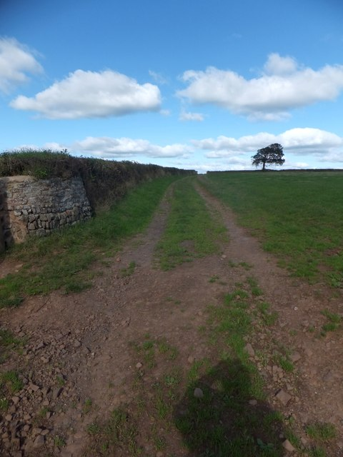 The Two Moors Way at Woodford
