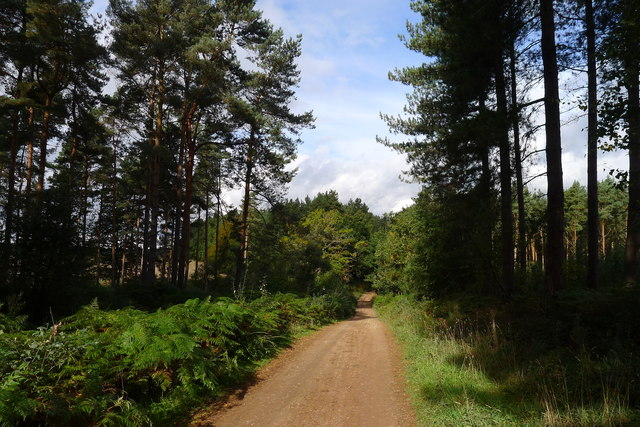 Cycle Route 6 through Forest Cottages Plantation