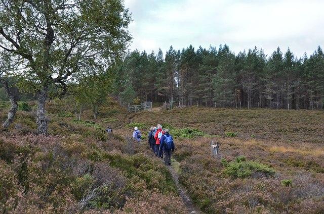 Path approaching An Car plantation, Braemar