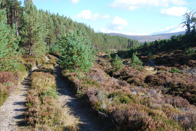 Small Glen and track