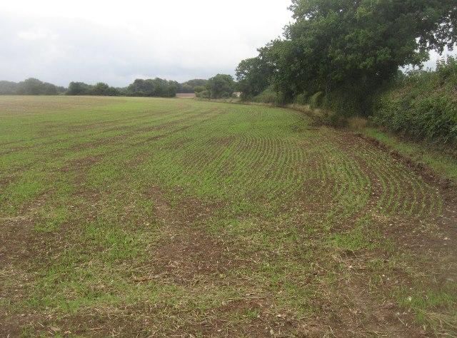 Farmland west of Kempshott